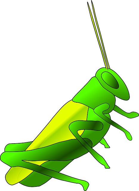 cricket-307982_640-1